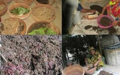 কেঁচো চাষ করে স্বাবলম্বী ঝিনাইদহ কালীগঞ্জের এলাকাবাসী