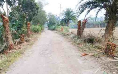 ঝিনাইদহ পৌরসভার রাস্তার গাছ কেটে নেয়ার অভিযোগ